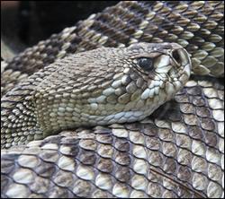snake removal Katy